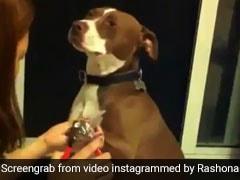 लड़की काटने लगी नाखुन तो कुत्ते ने की बेहोश होने की एक्टिंग, वायरल हुआ VIDEO