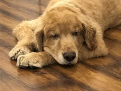 Blog: On Losing Disco, Our Golden Retriever And Irreplaceable Love