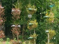 Bengal Forest Officer Creates Garden Using Plastic Bottles, Rubber Tyres