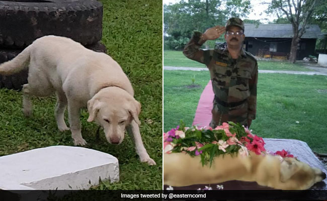 'Real Hero In Service To Nation': Army Dog 'Dutch' Dies At 9