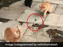 Four Cats Fight A Snake In This Shocking Video
