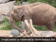 "Indian Elephant ""Little Mac"" Euthanised In California Zoo"