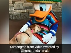 A Service Dog Meets Donald Duck. 10 Million Views For Heartwarming Video