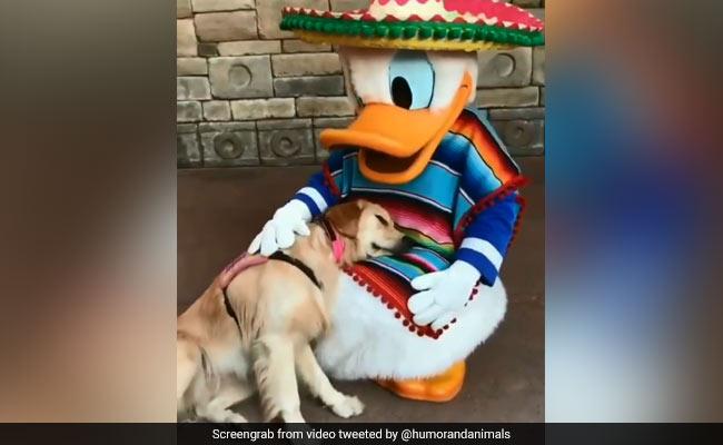 A Service Dog Meets Donald Duck. 10 Million Views For Heartwarming Video
