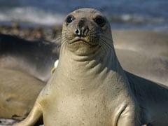 Angry Seal Helps Break Up International Drug Ring