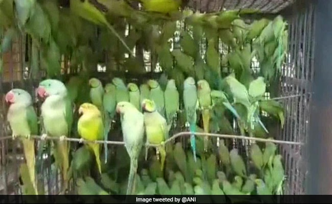 2 Men Caught Smuggling Over 500 Parrots In West Bengal