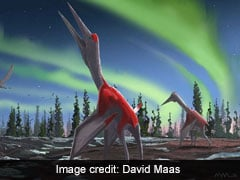 """""""Frozen Dragon Of North Wind"""" Among Largest Flying Animals: Scientists"""