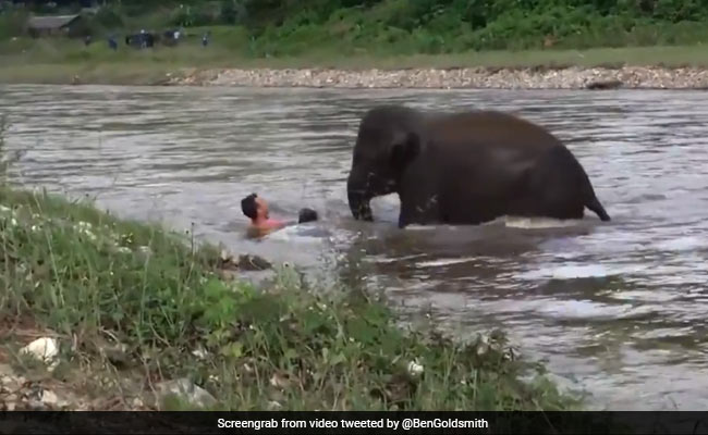 Baby Elephant Saves 'Drowning' Man. Twitter Touched By Old Video
