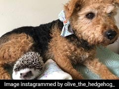 This Dog And Hedgehog Are BFFs And They're Taking Instagram By Storm