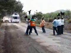 सीएम के काफिले के रास्ते में छोड़े 'कड़कनाथ मुर्गे', विरोध जताने के लिए किया ऐसा- देखें Video