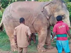 Tamil Nadu Elephants Hit With Sticks, Pulled With Ropes