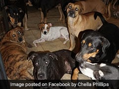 Woman Opens Up Home For 97 Dogs To Shelter Them From Hurricane Dorian
