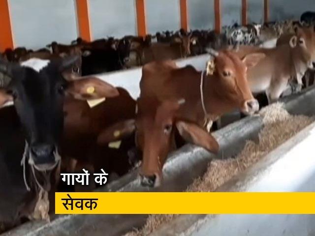 Videos : मध्य प्रदेश के खंडवा में हिंदू-मुस्लिम मिलकर बना रहे हैं गायों का अस्पताल
