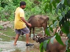 Over 200 Dead Due To Heavy Rains, Floods In Madhya Pradesh