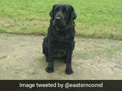 """Army Dog """"Jaari"""" Is A Big Hero On Social Media. What He Did"""