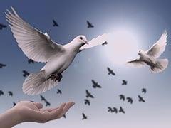 International Day of Peace: 'শান্তির জন্য জলবায়ু পদক্ষেপ'-কে বেছে নিল রাষ্ট্রসঙ্ঘ