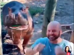 Video: Couple's Bizarre Gender Reveal Stunt Using A Hippo Angers Internet