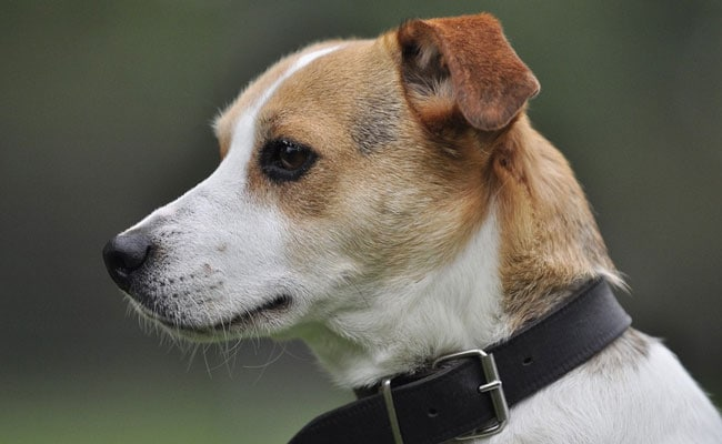Dog Saves Family By Alerting Them To Fire, Dies In Blaze