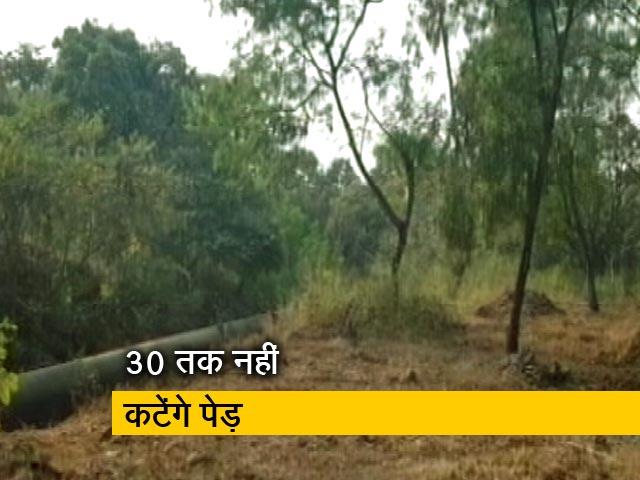 Videos : मुंबई की आरे कॉलोनी में 30 तारीख तक नहीं काटे जाएंगे पेड़