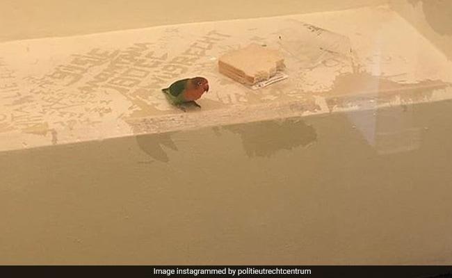 Picture Of Dutch 'Jailbird' Sparks Social Media Storm