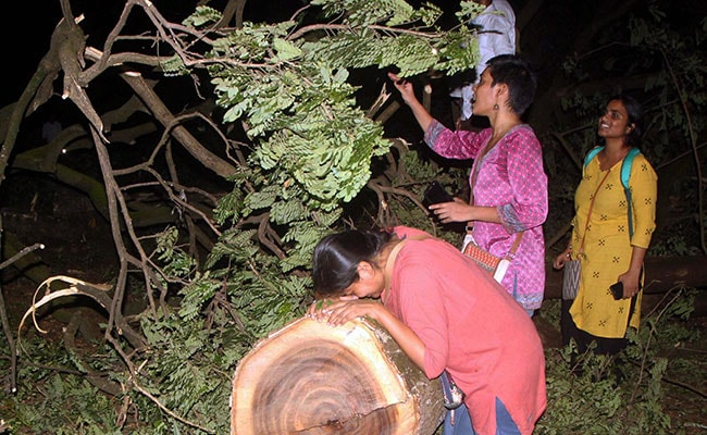 Mumbai's Aarey case: सुप्रीम कोर्ट ने कहा, इलाके का एक या 2 फीसदी भी वन क्षेत्र  में आता है तो पेड़ नहीं काटे जा सकते हैं, 5 बड़ी बातें