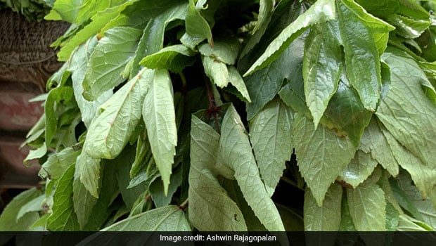 Iron Rich Ambadi: Desi Green Ambadi Health Benefits And Uses