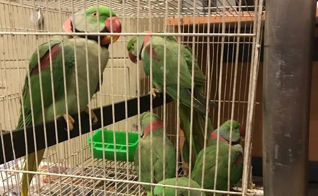 कोर्ट में पेशी के लिए आए 13 तोते तो देखने वालों के उड़ गए होश, फैसले के बाद...