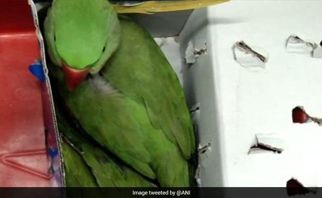 Uzbek Man Caught With 12 Parrots At Delhi Airport