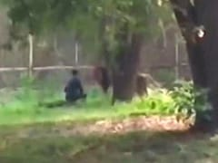 Watch: Man Sits Face-To-Face With Lion At Enclosure In Delhi Zoo, Rescued