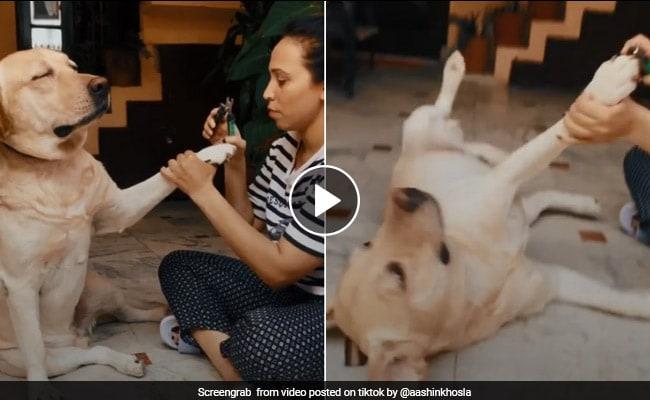 नाखून कटवाते समय कुत्ते ने किया कुछ ऐसा कि वीडियो हो गया वायरल, अब उसकी एक्टिंग को मिल रही तारीफ