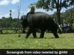 Watch: Elephants From Mysore Dasara Parade Play Football At Camp Site