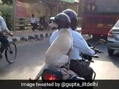 This Helmet-Wearing Dog From Delhi Has Won Twitter's Heart