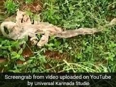 भारत में दिखी 7 मुंह वाले सांप की खाल, लोग करने लगे पूजा, देखें Viral Video
