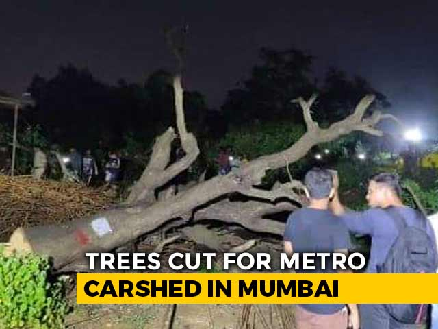 Video : Activists Detained As Bulldozers Roll Into Mumbai's Aarey, Cut Trees
