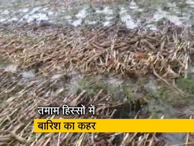 Video : रवीश कुमार का प्राइम टाइम: राजस्थान में बारिश ने चौपट की बाजरे और तिल की फसल
