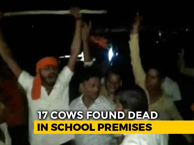 Video : 17 Cows Locked Up Inside Classroom In Madhya Pradesh Die, Probe Ordered