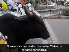 TikTok Top 5: ट्रैफिक पुलिस का ऐसा खौफ, चालान के डर से बैल ने भी नहीं तोड़ा सिग्नल, देखें Viral Video
