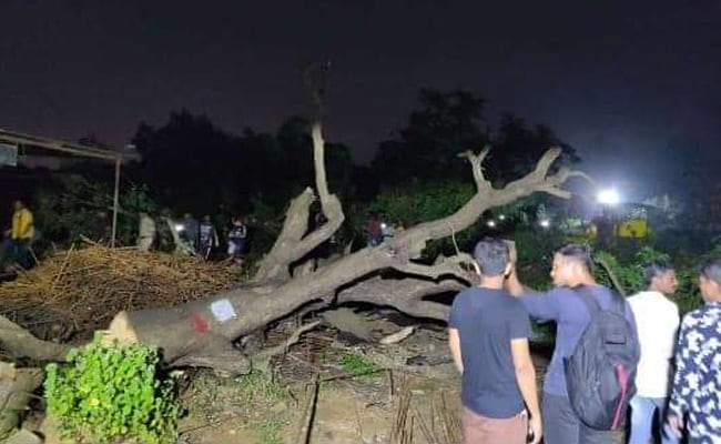 Aarey Protest Live Updates: Protests Continue In Aarey, Mumbai As Authorities Cut Down Trees