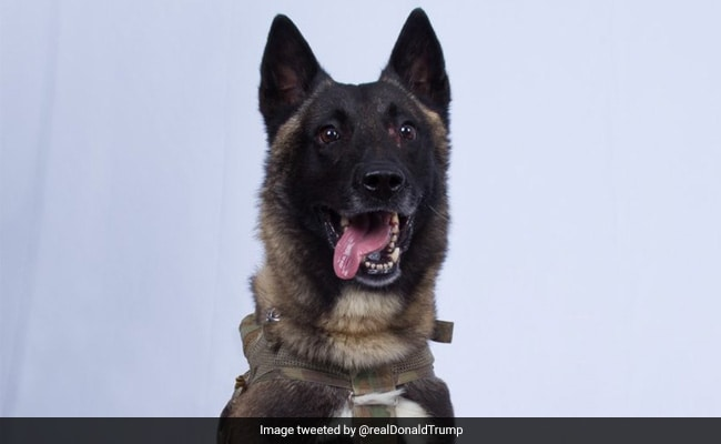 'Great Job': Trump Tweets Photo Of Dog Who Chased ISIS Chief In Raid