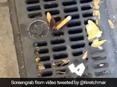 कॉकरोच का 'सिगरेट पीते' हुए Video हुआ वायरल, ट्विटर पर लोगों ने दिए ऐसे रिएक्शन्स