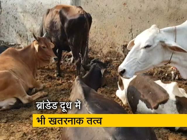 Videos : देशभर में दूध के 41 प्रतिशत सैंपल खरे नहीं उतरे