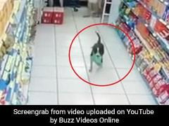 सुपरमार्केट में चोरी करने पहुंचा कुत्ता, उठाया सामान और ऐसे लगा दी दौड़, देखें Viral Video