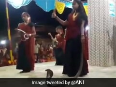 Gujarat Women Seen In Video Holding Cobras During Garba, 5 Arrested