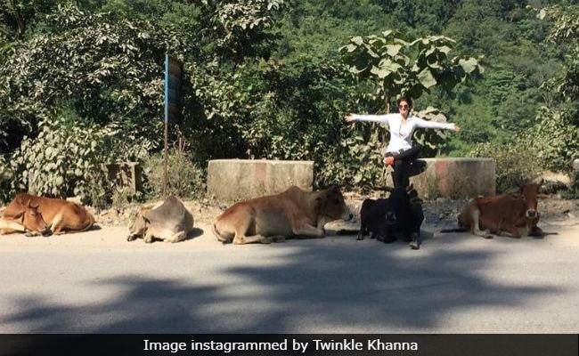 Twinkle Khanna's 'Six Cows' Joke Is Cracking Up The Internet