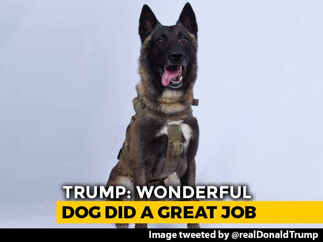 "Video : ""Name Not Declassified"": Trump Tweets Pic Of Dog Who Chased Baghdadi"