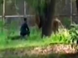 Video : Man Sits Face-To-Face With Lion At Enclosure In Delhi Zoo, Rescued