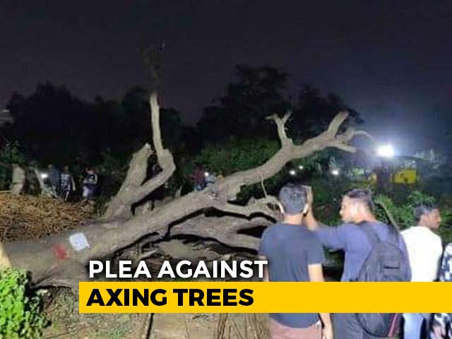 Video : No More Trees To Be Cut In Mumbai's Aarey Till October 21, Says Top Court