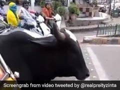 Viral Video:सड़क पार कर रही थी गाय, रेड लाइट देखते ही खुद पर ऐसे लगाया ब्रेक,  प्रीति जिंटा ने शेयर किया Video