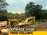 Video : Top Court To Hear Case For Mumbai's Aarey Trees, Activists Get Bail