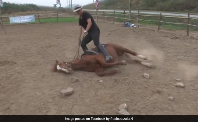 This Horse Hates Working So Much, He Plays Dead When People Try To Ride Him